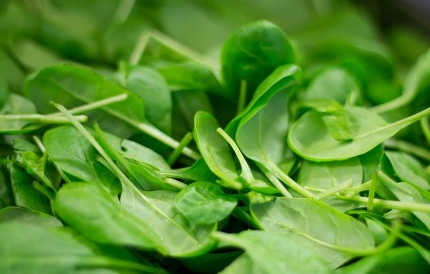 Immune system booster foods - Spinach